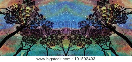 Symmetrical grove of tall gum trees (Eucalyptus) contrasted against an aurora like starlit evening sky. Digitally textured composite image.