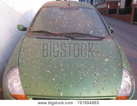 Parked car under bird roosting tree in Andalusian Village