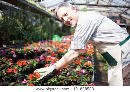 Greenhouse worker portrait