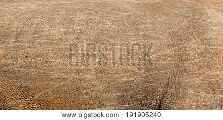 nature and wildlife concept - rhino skin texture