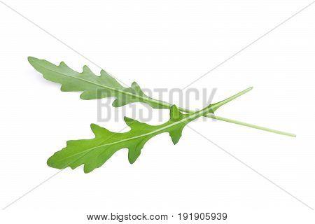 wild rocket green leaves (Arugula) isolated on white backbground