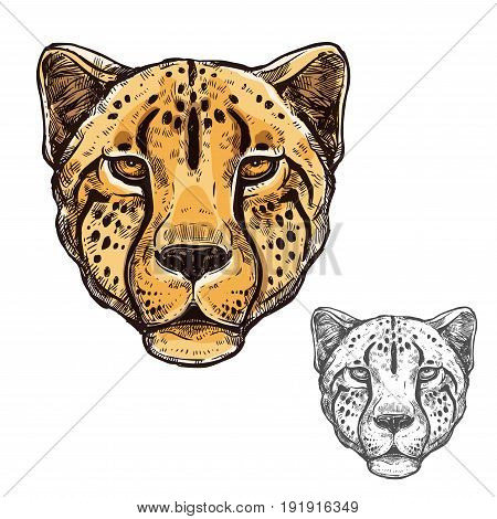 Cheetah African wild animal head or leopard muzzle sketch. Vector isolated icon of cougar cat for zoology, mascot blazon of sport team, wildlife nature adventure scout club or tattoo