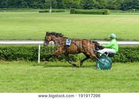 WROCLAW, POLAND - JUNE 18: Thetis des Neuzy horse on the race for 8-year-old and older trotting French on 18 June 2017 in Wroclaw, Poland. This is an annual race on Partenice track open to the public.