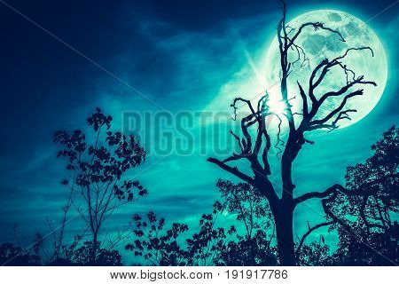 Night landscape of sky and super moon with bright moonlight behind silhouette of dead tree serenity nature. Outdoors at nighttime. Cross process. The moon taken with my own camera.