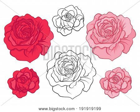 Rose flowers. Set of colored flowers.Stock line vector illustration.