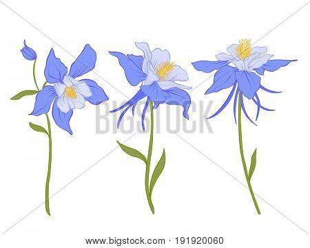 Columbine, aquilegia, flowers. Set of colored flowers.Stock line vector illustration