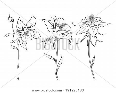 Columbine Flowers Vector Photo Free Trial Bigstock