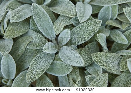 Wet green leaves background. Fresh nature foliage. Horizontal