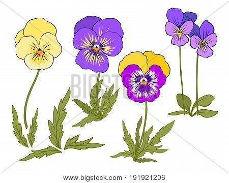 Violet flowers. Set of colored flowers.Stock line vector illustration.