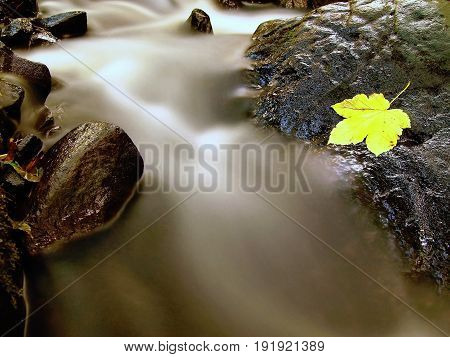 Yellow Green Maple Leaf Caught On The Stone In Rapids Of Mountain Stream.