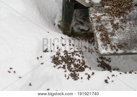 Bees died from hunger and cold near a beehive outdoor cropped photo