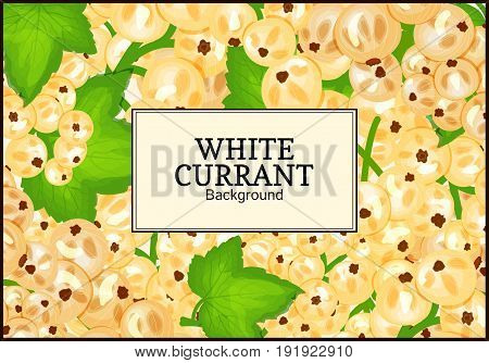 Rectangle label on ripe white currant background. Vector card illustration. White berry fresh and juicy currant for packaging design food, juice jam, ice cream, smoothies, detox, cosmetics cream, tea