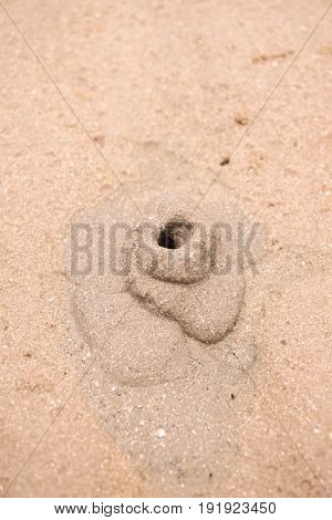 close up small ghost crab digging hole in the sand