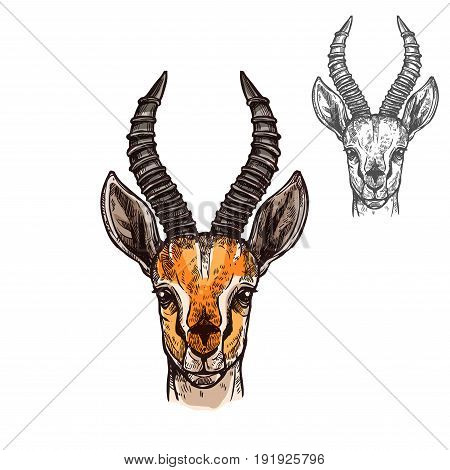 Antelope African wild animal head or muzzle sketch with horns. Vector isolated icon of gazelle or saigas for zoology, mascot blazon of sport team, wildlife nature adventure scout club or tattoo