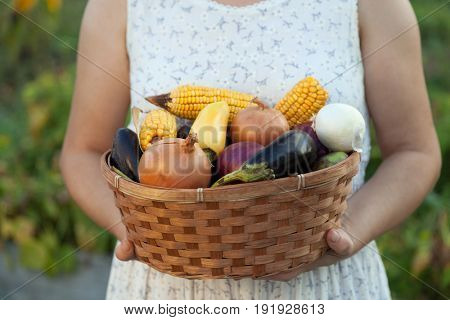 woman gardener with a basket of fresh vegetables. person holds harvest from field. Organic shoot with natural garden