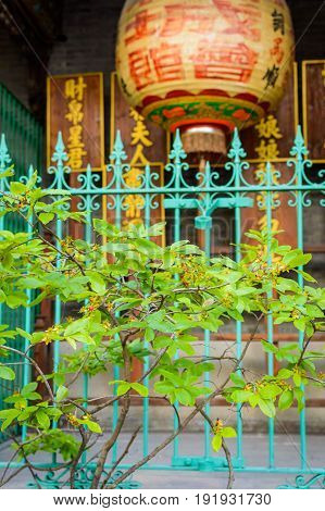 Chinese Lantern In Garden