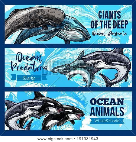 Ocean giant predatory animals banners set. Vector design of sperm whale cachalot, killer whale or orca and hammerhead or white shark and toothed predator fishes and marine mammals