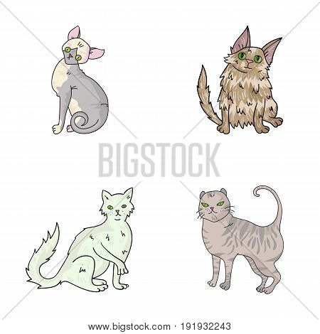 Turkish Angora, British longhair and other species. Cat breeds set collection icons in cartoon style vector symbol stock illustration .