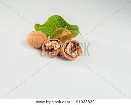 Worm walnut on a white background close up