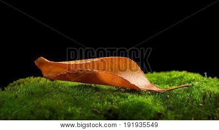 Abscissed Alone Leaf
