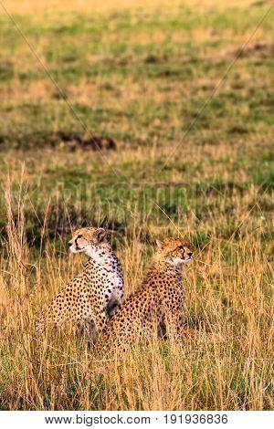 Observation point in Masai Mara. Kenya, Africa
