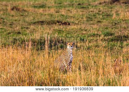 The cheetah observation point. Masai Mara, Kenya, Africa