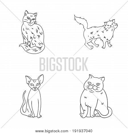 Sphinx, nibelung, norwegian forest cat and other species. Cat breeds set collection icons in outline style vector symbol stock illustration .