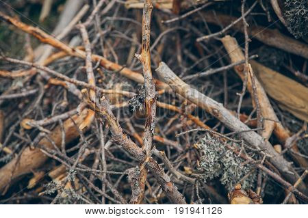 Brushwood background. Broken branches texture and background. Organic backgrounds. Tree broken branches in the forest. Abstract texture and background for designers.