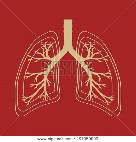 Human Lung anatomy illustration illness respiratory cancer graphics image