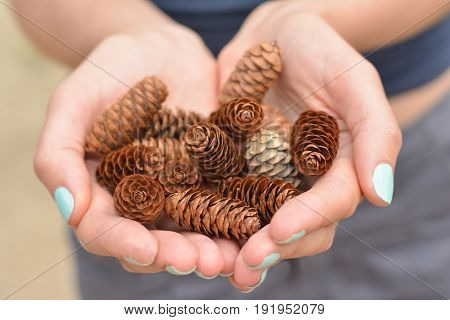 Girl with manicure in the forest of Canada holds a handful of pine cones