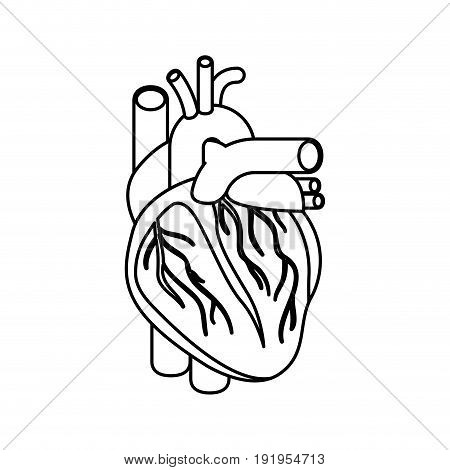 sketch silhouette heart system human body vector illustration