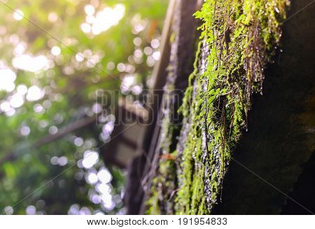 Moss and lichen in forest, mossy rain forest, Soft focus