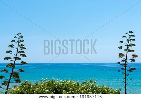 Blossom Of Agave Plant On Tropical Island With Blue Clear Sea Water And Blue Sky, Summer Vacation