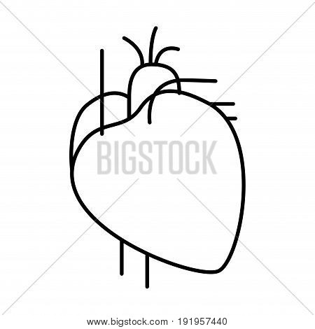 hand drawing contour heart system human body vector illustration