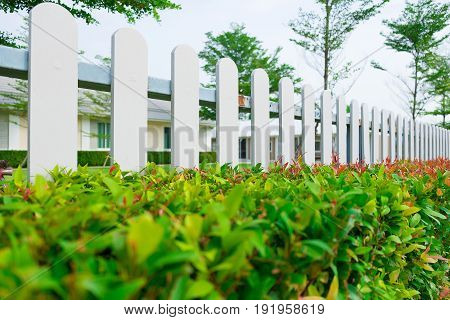 White wooden picket fence with green plant hedge under sun light.