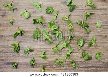 Fresh baby orach saltbush edible wild plants on wooden background. Eating healthy organic local food. First spring summer green crop. Vegetarian vegan greens. Spring seasonal background