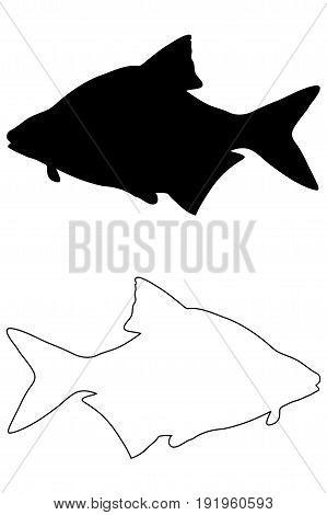 Common bream silhouette vector , (Abramis brama)