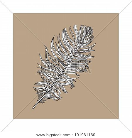 Hand drawn smoth black and white dove bird feather, sketch style vector illustration on brown background. Realistic hand drawing of grey bird feather
