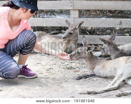 Young woman feeds a kangaroo at the Australian Zoo Gan Guru in Kibbutz Nir David in Israel