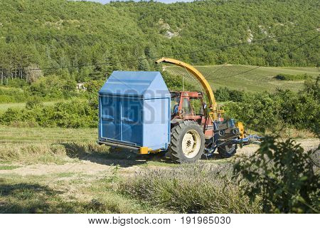 The tractor runs on a lavender field in Provence France