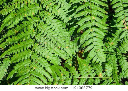 Photo of dense foliage of ferns in the forest bright sunny day