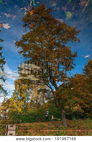 Reflection of autumn trees in a pond. Photographed in the town of Pushkin Leningrad district Russia