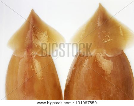 cuttle fish (sotong)