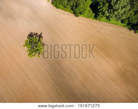 Drone Image. Aerial View Of Rural Area With Fields. Single Isolated Tree