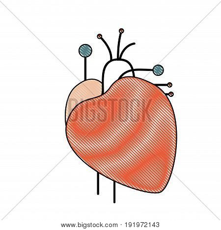 color crayon simple silhouette heart system human body vector illustration