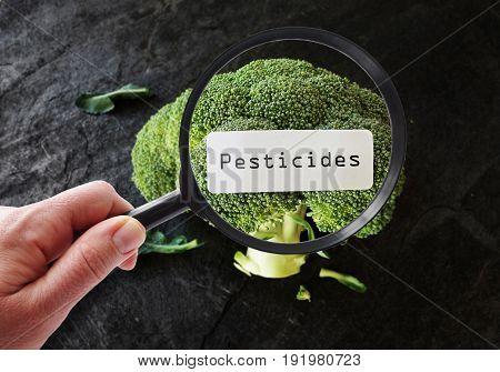 Person examining broccoli with a  pesticide label
