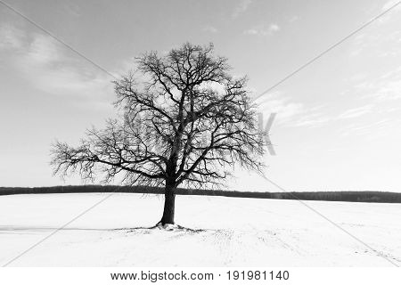 Black and white landscape in retro style with black tree on background of sky and white snow