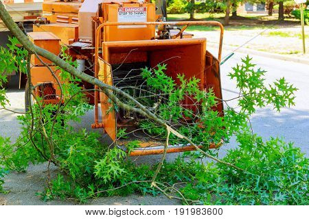 Landscapers Using Chipper Machine To Remove And Haul Chainsaw