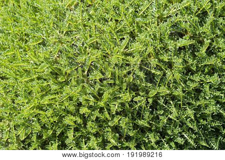 Exotic Tropical Moss Background