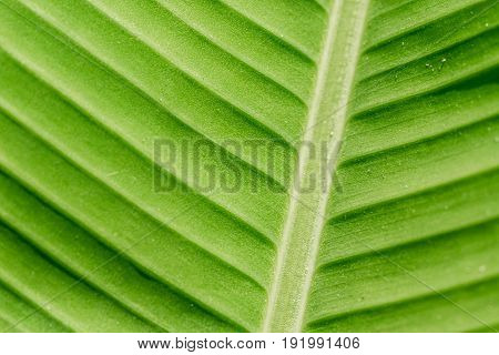 Green nature leaf texture in details as natural background or wallpaper with copy space.